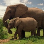Everything I Know About Software Development I Learned from Elephants