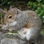 Make Meetings More Effective: Stop Chasing Squirrels